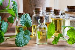 A bottle of melissa essential oil with fresh melissa twigs. A bottle of melissa lemon balm essential oil with fresh melissa twigs and other bottles in the royalty free stock image