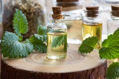 A bottle of melissa essential oil with fresh melissa twigs and o. A bottle of melissa lemon balm essential oil with fresh melissa twigs and other bottles in the stock images