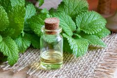 A bottle of melissa essential oil with fresh melissa twigs Royalty Free Stock Photo