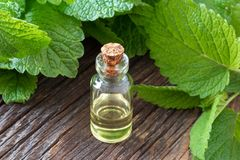 A bottle of melissa essential oil with fresh melissa twigs stock photography
