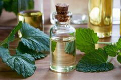 A bottle of melissa essential oil with fresh melissa twigs. A bottle of melissa lemon balm essential oil with fresh melissa twigs and other essential oil bottles stock photos