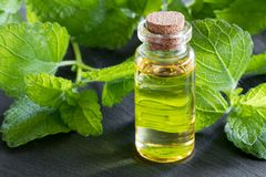 A bottle of melissa essential oil with melissa leaves. A bottle of melissa lemon balm essential oil with melissa leaves in the background stock photo