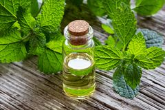 A bottle of melissa essential oil with melissa twigs. A bottle of essential oil with fresh melissa stock photos