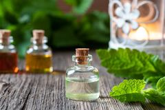 A bottle of melissa essential oil with melissa twigs stock photography