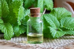 A bottle of melissa essential oil with melissa twigs. A bottle of essential oil with fresh melissa stock images
