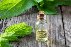 A bottle of melissa essential oil with melissa twigs stock photos
