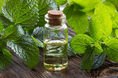 A bottle of melissa essential oil with fresh melissa twigs. A bottle of melissa lemon balm essential oil with fresh melissa twigs on old wood royalty free stock photos