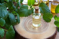 A bottle of melissa essential oil with fresh melissa twigs. A bottle of melissa lemon balm essential oil with fresh melissa twigs on a wooden table stock images