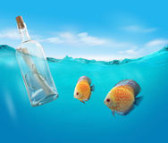Bottle with a message. And fishes Stock Photos