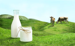 Bottle of milk and cows on  green field. Stock Images