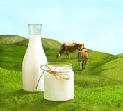Bottle of milk and cows on  green field Royalty Free Stock Photo