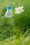 Bottle of mineral water and  flower of narcissus on green grass. Bottle of mineral water and white and yellow color daffodil on green grass with drops of dew in Stock Photography