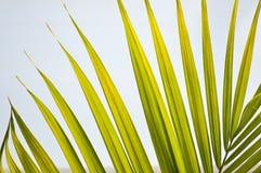 Bottle neck palm leaf Royalty Free Stock Photos