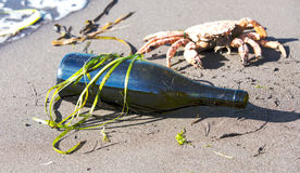 Bottle on an ocean coast Stock Image