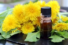 A bottle of oil on a background of yellow dandelion. Oil, dandelion, essential, herbal, background, flower, yellow, medicinal, natural, bottle, summer, fresh royalty free stock image