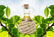 Bottle of Olive Oil Royalty Free Stock Image