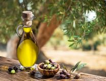 Bottle of olive oil and berries are on the wooden table under the olive tree