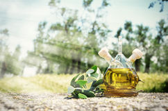 Bottle of olive oil in the olive grove Royalty Free Stock Photo