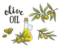 Bottle with olive oil. Vector isolated objects. Olive branches. Bottle with olive oil. Vector isolated objects. Hand drawn olive branches royalty free illustration