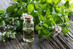 A bottle of oregano essential oil with blooming oregano twigs. On a wooden background Stock Photos