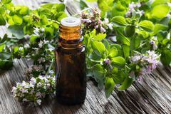 A bottle of oregano essential oil with blooming oregano twigs. A dark bottle of oregano essential oil with blooming oregano twigs on a wooden background Royalty Free Stock Image