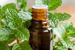 A bottle of peppermint essential oil with peppermint twigs. A bottle of peppermint essential oil with fresh peppermint twigs in the background stock image
