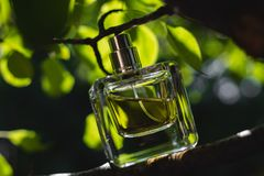 Bottle of perfume. At nature background Stock Photography
