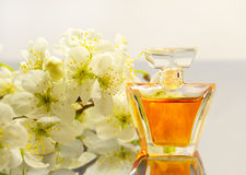 Bottle of perfume and branch of cherry Royalty Free Stock Photos