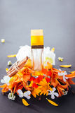 Bottle of perfume with ingredients. On black background Royalty Free Stock Photos