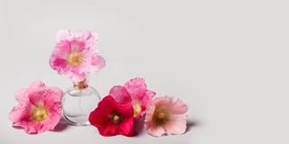 Bottle of perfume and mallow flowers. Perfume fragrance concept. Bottle of perfume and mallow flowers. Perfume fragrance freshness concept. Long banner format Stock Photos