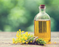Bottle of rapeseed oil canola and rape flowers bunch Stock Photography