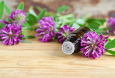 Bottle of red clover extract (tincture, infusion, oil) Stock Image