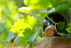 Bottle of red wine . Royalty Free Stock Photography