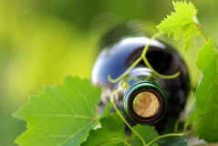 Bottle of red wine . Stock Photo