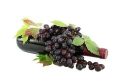 Bottle of red wine and grapes isolated. Royalty Free Stock Photo