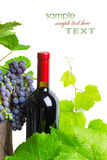 Bottle of red wine with grapes Royalty Free Stock Photos