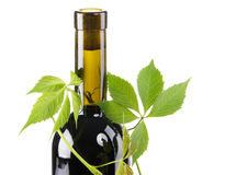 Bottle of red wine in green leaves Royalty Free Stock Images