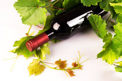 Bottle of red wine with green vine leaves Royalty Free Stock Photo