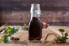 Bottle of red wine in which roots of young Geum urbanum plants have been macerated. According to an old recipe of Hildegard of Bingen royalty free stock photo