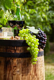 Bottle of red wine with wineglass and grapes in vineyard. Bottle of red wine with wineglass and grapes in garden stock photography