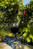 A bottle of red wine in the wineyard Royalty Free Stock Image