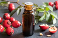 A bottle of rose hip seed oil on a gray background. A bottle of rose hip seed oil with fresh rose hips in the background Royalty Free Stock Photos