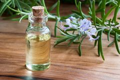 A bottle of rosemary essential oil with fresh blooming rosemary Stock Photos