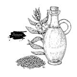 Bottle of sesame oil with plant. Vector Hand drawn illustration. Glass pitcher vintage engraving isolated on white background. Great for menu, banner, label Royalty Free Stock Photos