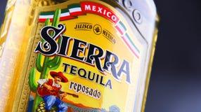 Bottle of Sierra Tequila Stock Images