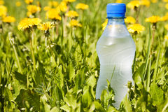 Bottle in a summer meadow. Stock Photo
