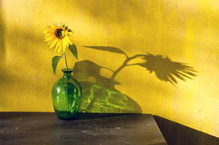 Bottle with sunflower and evening sunlight Royalty Free Stock Photo
