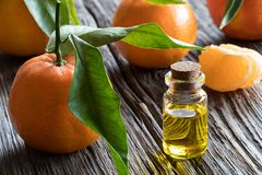 A bottle of tangerine essential oil with tangerines in the backg. A bottle of tangerine essential oil on a wooden table, with whole tangerines and tangerine Royalty Free Stock Images