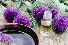 Bottle of thistle essential oil with thistle flowers on wooden background royalty free stock photos