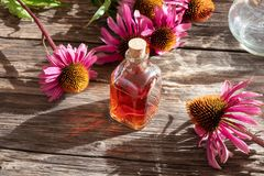 A bottle of tincture with fresh echinacea flowers royalty free stock photo